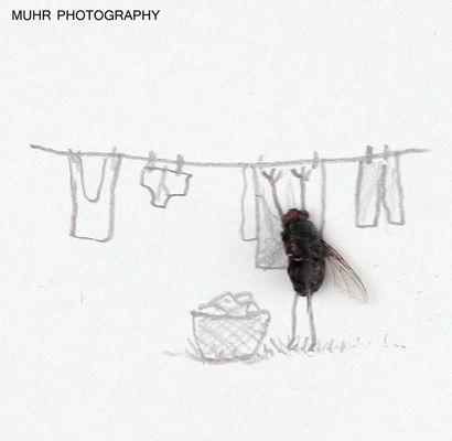 Magnus Muhr / Flughumor   http://iloapp.area81.se/gallery/muhrgalleri?Album=11