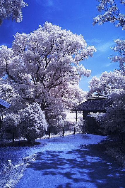 "tulipnight: ""garden under daylight by KoTo_EoEo on Flickr. """