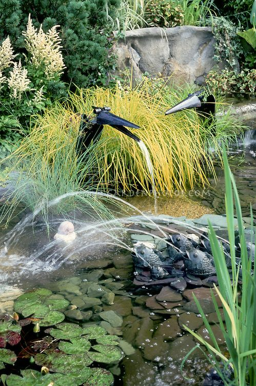 11 best adding to the pond images on pinterest garden for Ornamental pond fish golden