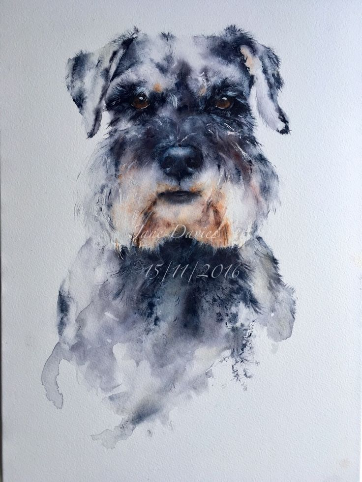 Schnauzer painted in watercolour by artist Jane Davies ...