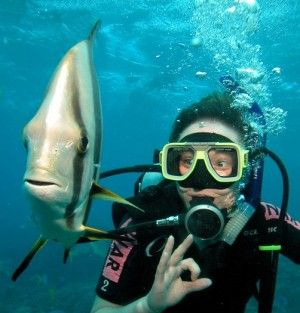 Learn to Scuba Dive!