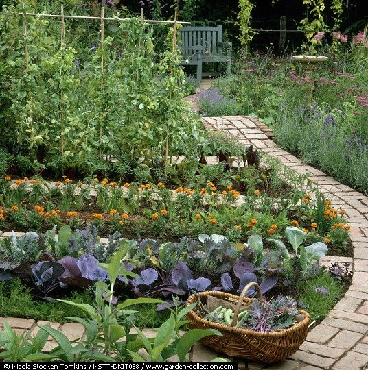 Raised Beds Kale