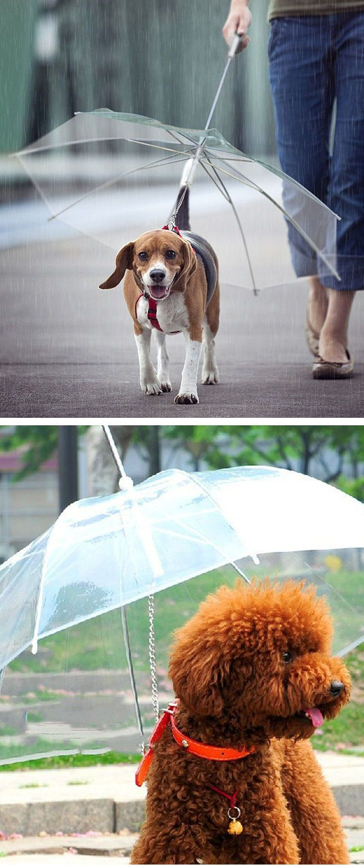 best 25 dog umbrella ideas on pinterest doxin dog dog beds and