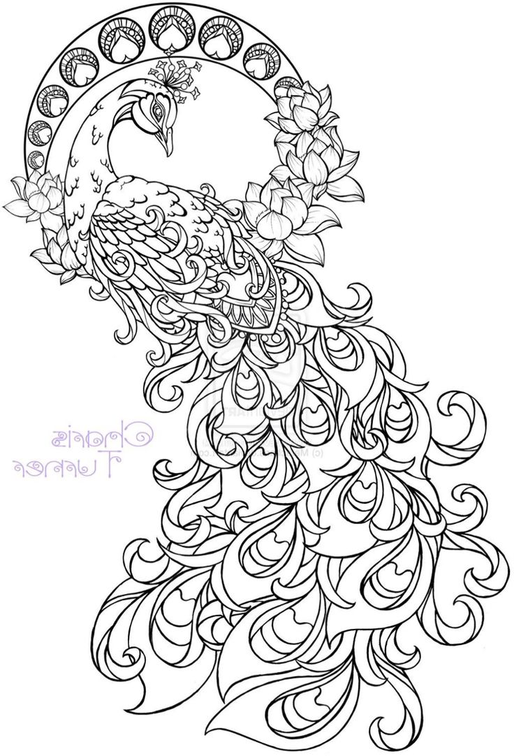 Free coloring pages of peacock feathers coloring everyday printable - Paisley Pattern Tattoo Design To Coloring Page