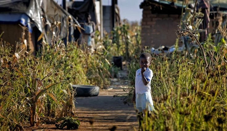 Zimbabwe: Harare in deep water over typhoid outbreak   Daily Maverick