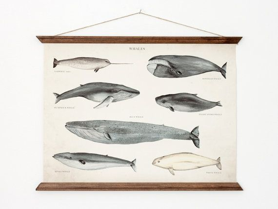Yes, please!! Whales A3 Canvas poster - vintage educational chart illustration - home decor - WHAP3006