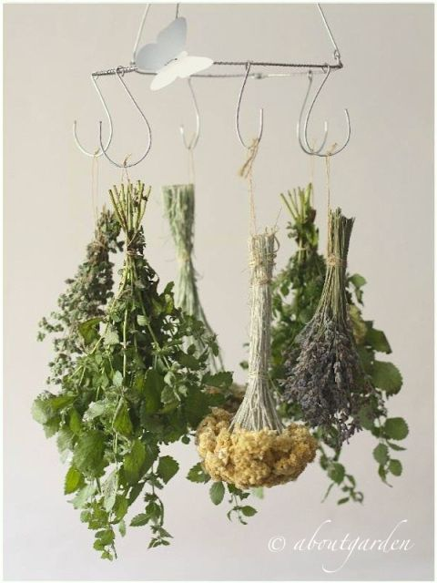 essica erbe e fiori