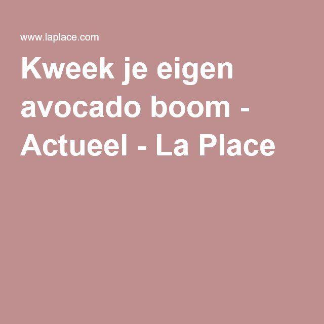 Kweek je eigen avocado boom - Actueel - La Place