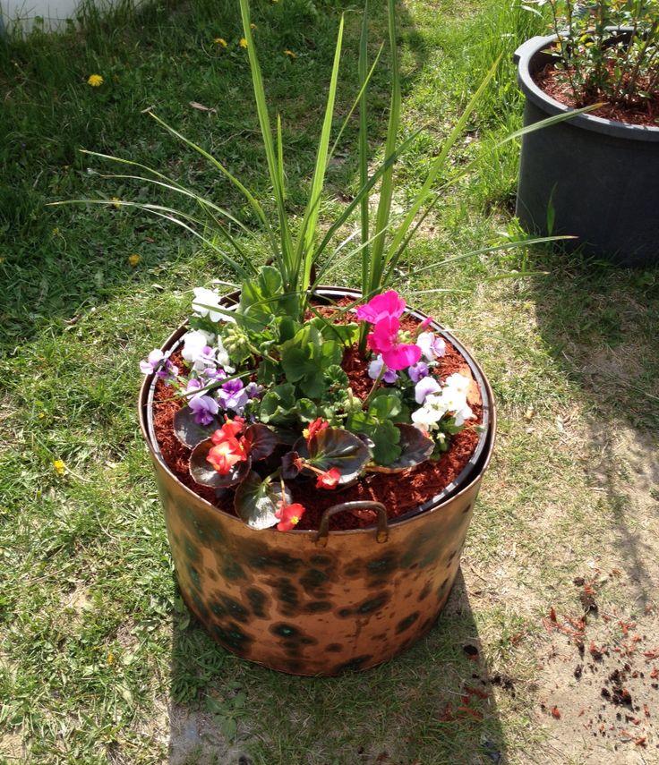 Pot a fleur dans un chaudron en cuivre