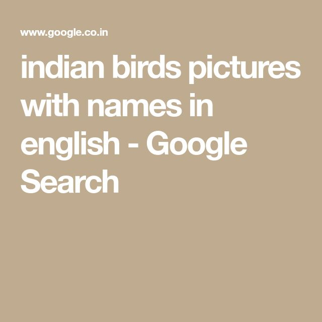 indian birds pictures with names in english - Google Search