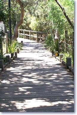 Mooloolaba boardwalk