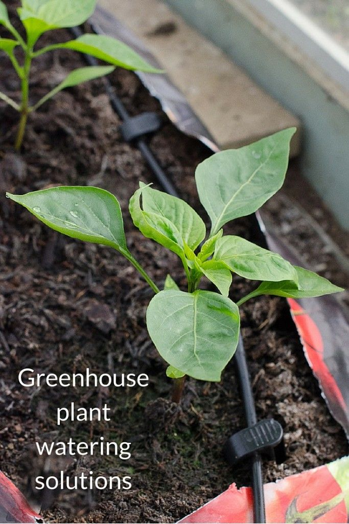 Reviewing Greenhouse Sensations plant watering kits which aim to make greenhouse plant watering easier, while producing healthier plants and bigger crops.