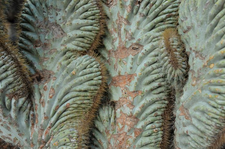 Love the texture, nature, green, cactus. Copyright.