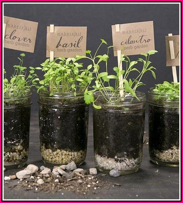 Helpful Gardening Tips Blooming Now Mason Jar Herb Garden Herb