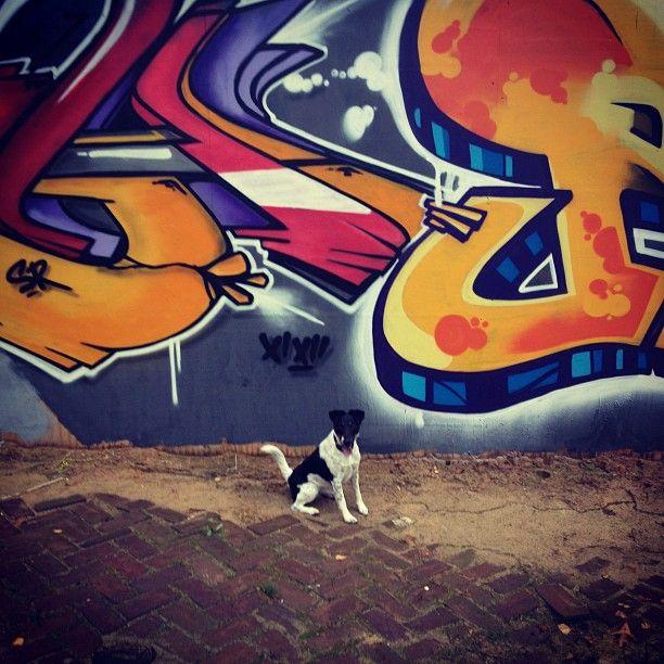 #dog #walk #arnhem #city #streets
