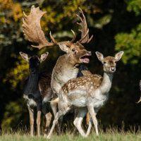 Knepp Estate - spring/summer/autumn safaris