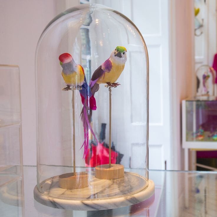 Royal Smushi Cafe Birds in glass cage