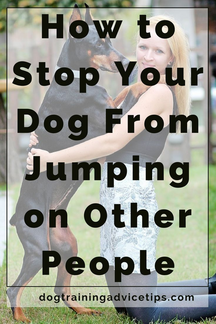 how to stop a dog from jumping up on people