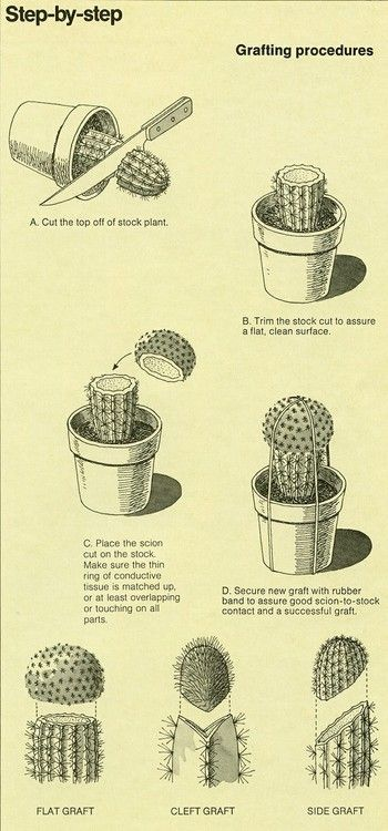 Grafting procedures - Gardener Community & Homesteading Would be fun to try with kids