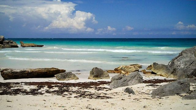 Tulum, MexicoSea Shells, Tulum Mexico, Beach Beach, Places I D, Shore Things