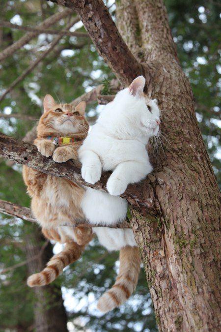 Lookout cats   ᘡℓvᘠ □☆□ ❉ღ // ✧彡●⊱❊⊰✦❁❀ ‿ ❀ ·✳︎· SU MAY 28 2017 ✨ ✤ ॐ ⚜✧ ❦ ♥ ⭐ ♢❃ ♦♡ ❊ нανє α ηι¢є ∂αу ❊ ღ 彡✦ ❁ ༺✿༻✨ ♥ ♫ ~*~ ♆❤ ☾♪♕✫ ❁ ✦●↠ ஜℓvஜ .