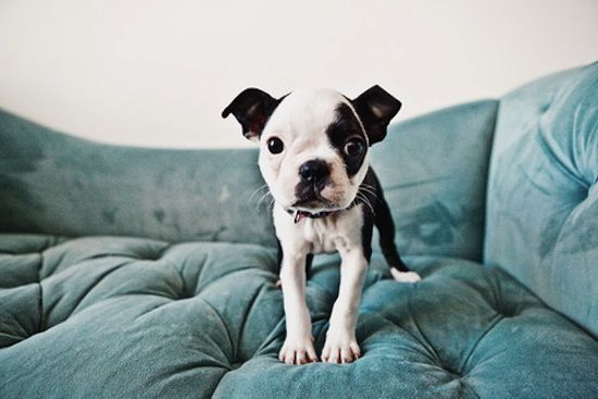 Dis my couch.