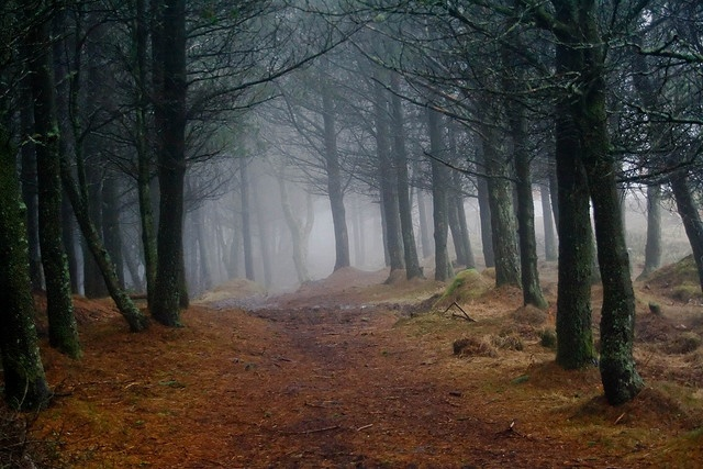 Spooky Woods by Trossachs Photography, via Flickr  #Magicalmenagerie