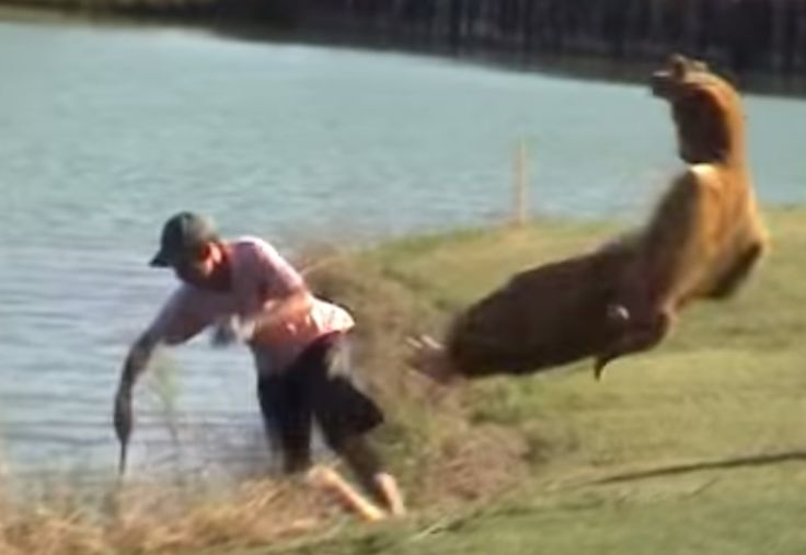 #Funny #Kangaroo #Vs #MAN!!! #Fight #FAIL #Howley Funniest Ever Seen KANGAROO PRANK Guy in kangaroo suit ruins people's days. This is hilarious!!! Video Source: https://www.youtube.com/watch?v=81szj1vpEu8
