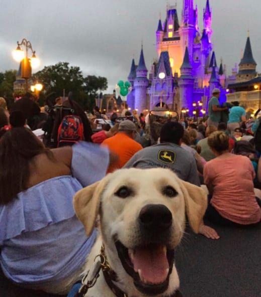 4 Disney World Resorts To Allow Pets In Hotel Rooms Photo Credit Bilderbackciara