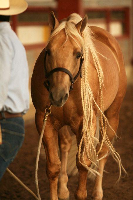Quarter Horse stallion Whizmo. Love his mane