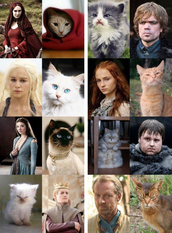 Game of Thrones characters and their cat versions. (#caturday)