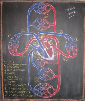 The Waldorf Way blog - Dr. Rick Tan grade 7 physiology block.