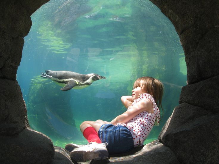 Hours and Admission Rates - Woodland Park Zoo Seattle WA