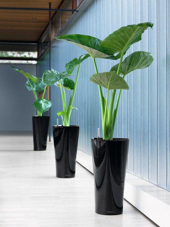 Pi di 25 fantastiche idee su arredamento piante da for Giardino rustico traliccio decorativo