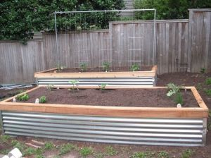 corrugated metal raised bedsWood Trim, Gardens Beds, Rai Beds Gardens, Raised Beds, Little Gardens, Corrugated Metals, Old Wood, Veggies Gardens, Metals Side