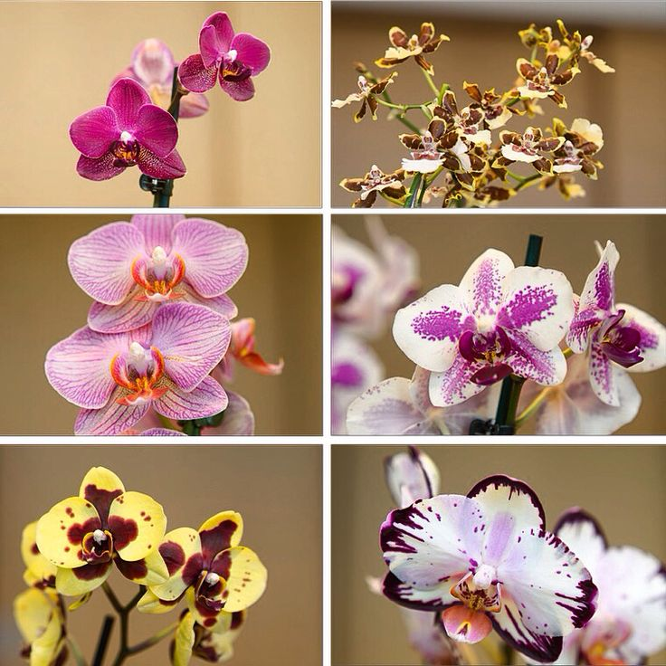 Nice ORCHIDS.
