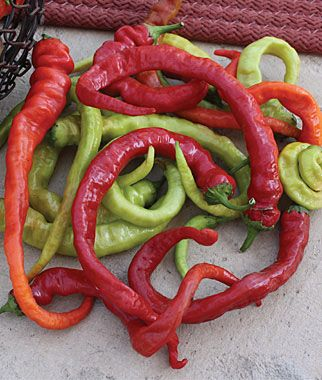 Bought these last year, prolific producer and a very good drying pepper, then ground into powder. This powder has a very rich sweet/hot smoky flavor, different from other Cayenne peppers