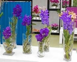 50 Best Images About Water Culture Orchids On Pinterest Glass Vase Exotic Plants And Image Search