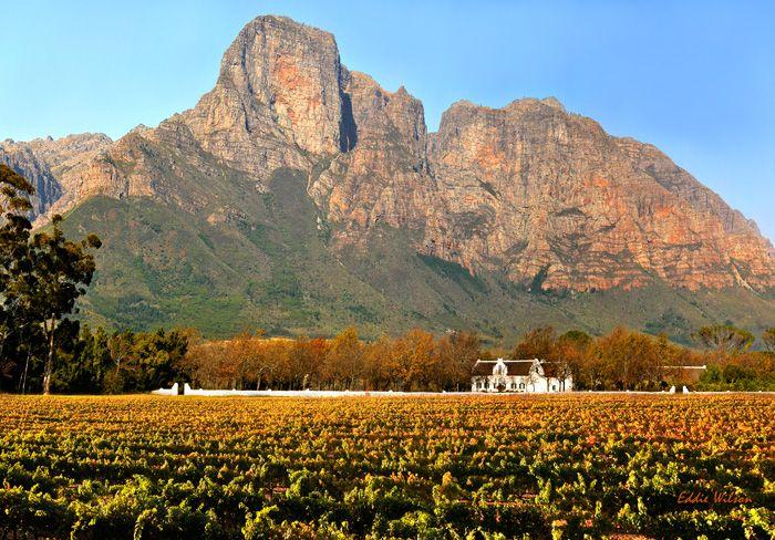 O segredo da qualidade dos vinhos da região deve-se a dimensão e localização das vinhas Boschendal, bem como a selecção criteriosa do local para cultivo dos diferentes tipos de varietais