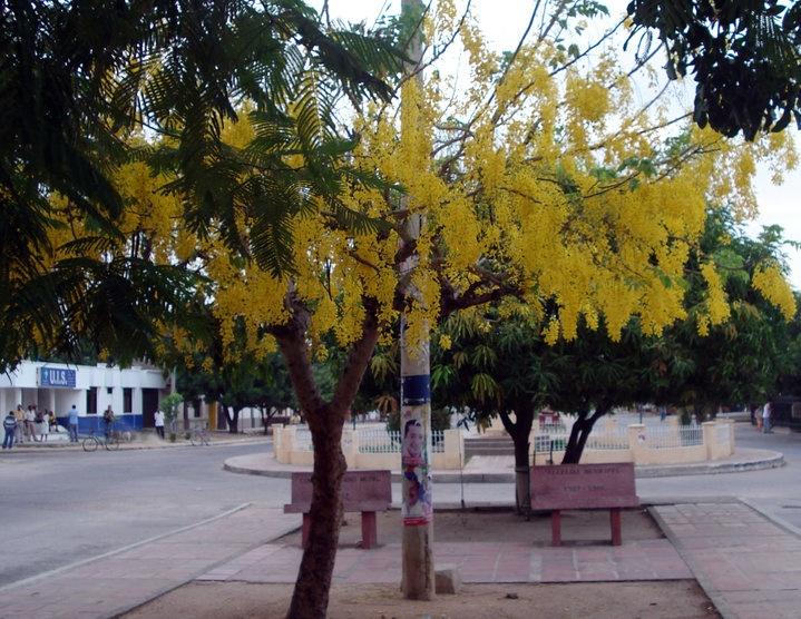 Calle del embudo, San Juan del Cesar