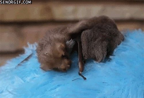 Little brown bats sleep almost 20 hours a day while horses only sleep about three. | 14 Surprising Facts About Sleep As Told By Tired Animals