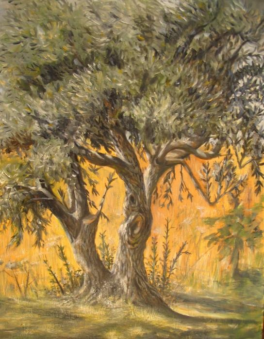 Google Image Result for http://images.fineartamerica.com/images-medium/olive-tree-yvonne-ayoub.jpg