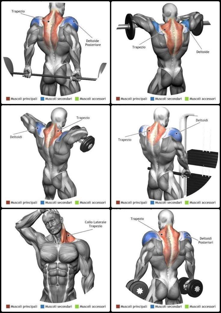 10 Beste Muskelaufbauende Schulterübungen zum Erstellen von 3D-Schultern