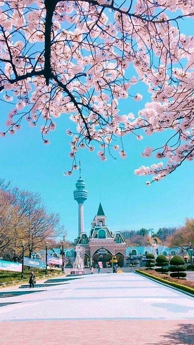 Cherry blossom wallpaper in korea