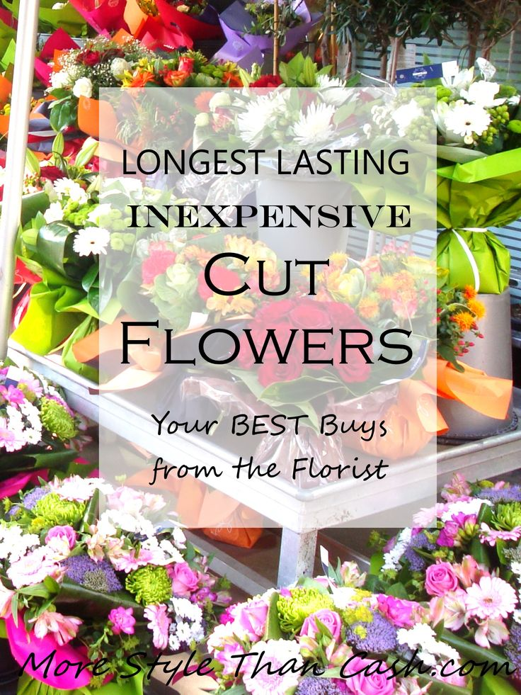 Find the longest lasting inexpensive cut flowers that you can buy from the grocery stores and from high end flower shops.