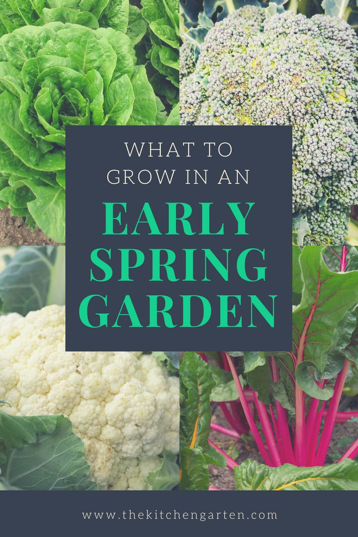 Not sure what to grow in your early spring garden? Check out our list of vegetables that love the warm(ish) days and cooler nights of early spring. via @cpjsouthern