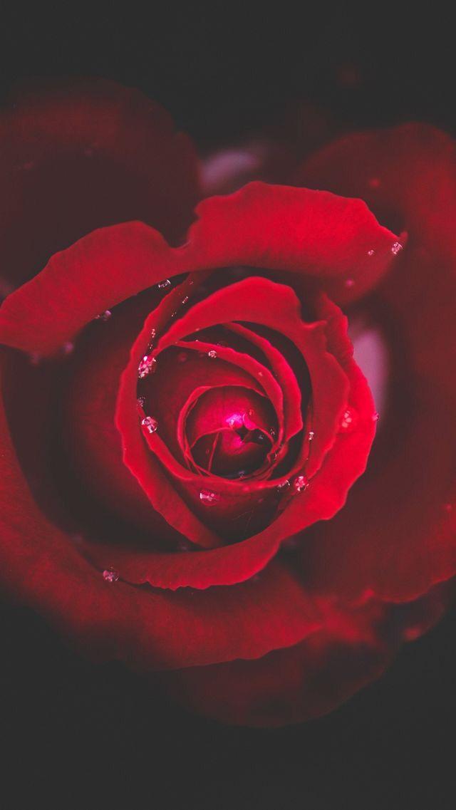 Epingle Par M Verneau Sur Photo Rouge En 2020 Fond Ecran Fond Ecran Iphone Fond Ecran Rose