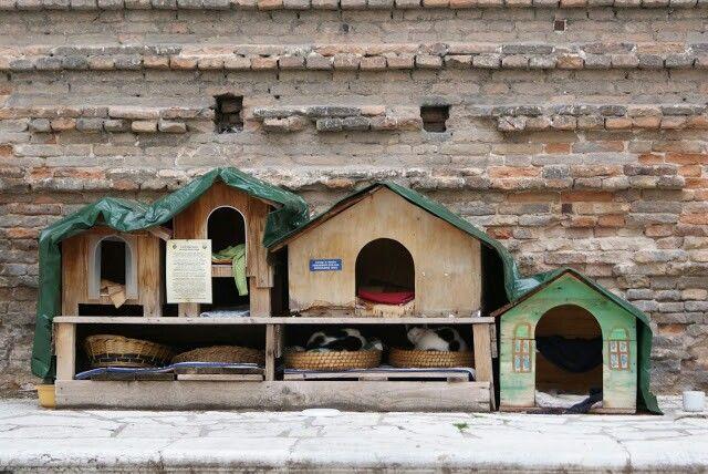 Cat's house, Venice