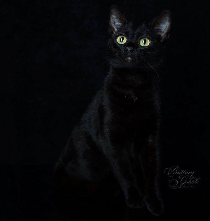 black-lykoi-cats