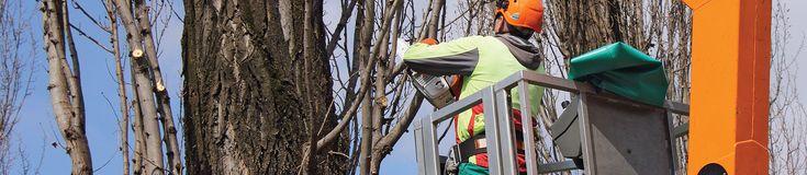 http://www.trezrus.com  Roanoke VA tree service, tree services Roanoke, tree removal Roanoke VA, Roanoke tree removal, stump removal Roanoke